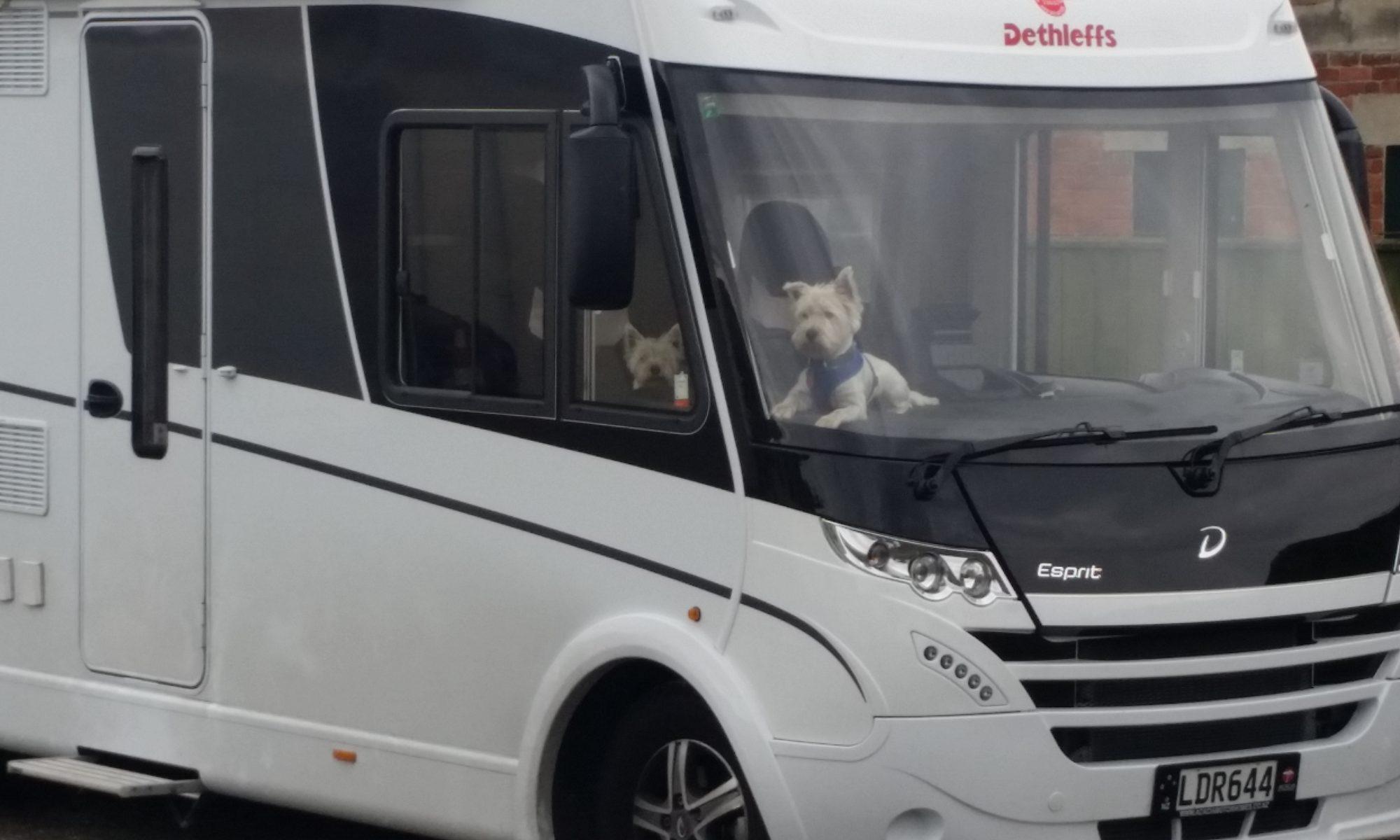 Dogonit Travels
